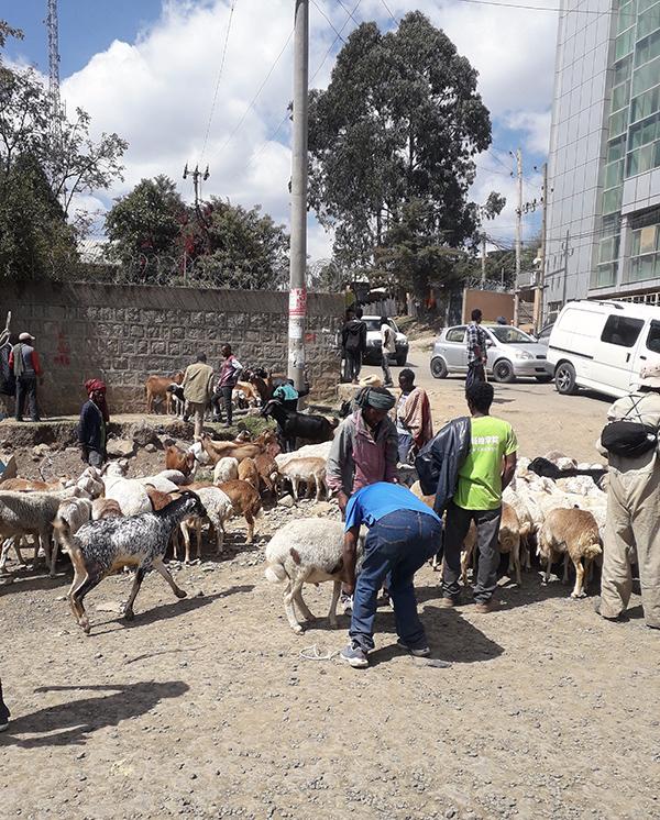 Miehiä ja vuohia kadulla Addis Abebassa.