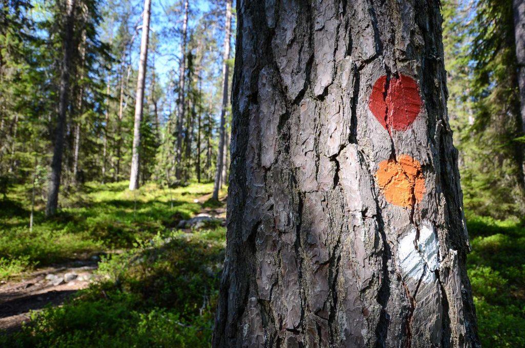 Keski-Suomessa on viisi kansallipuistoa.