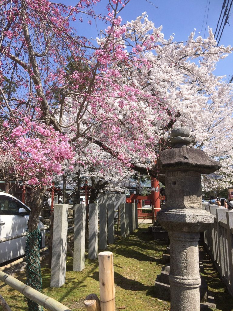 the perfect combination of cherry blossoms and traditional buildings
