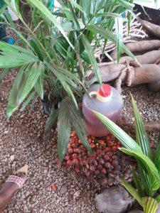 Palmuöljy on yksi Ghanan tärkeimmistä maataloustuotteista.