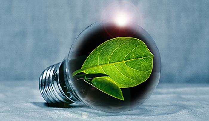 Lehti lampun sisällä