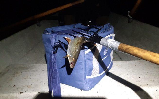 Tuulastuksen saalis: yksi kala.