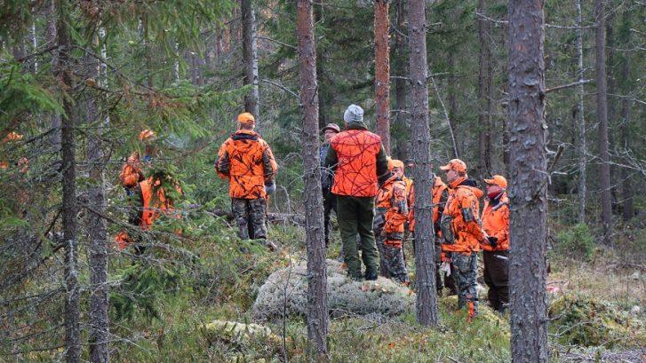 metsästäjiä oransseissa vaatteissa metsässä